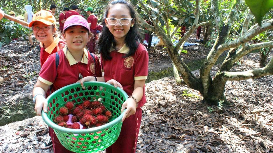 Dã ngoại miệt vườn cùng học sinh Quốc tế Á Châu